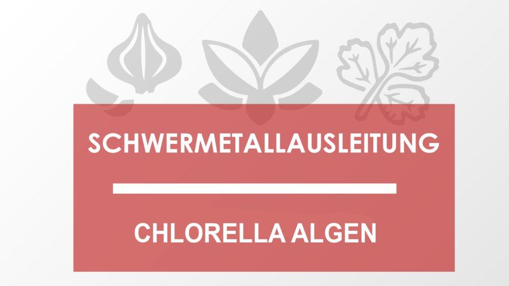 Schwermetallausleitung mit Chlorella Algen